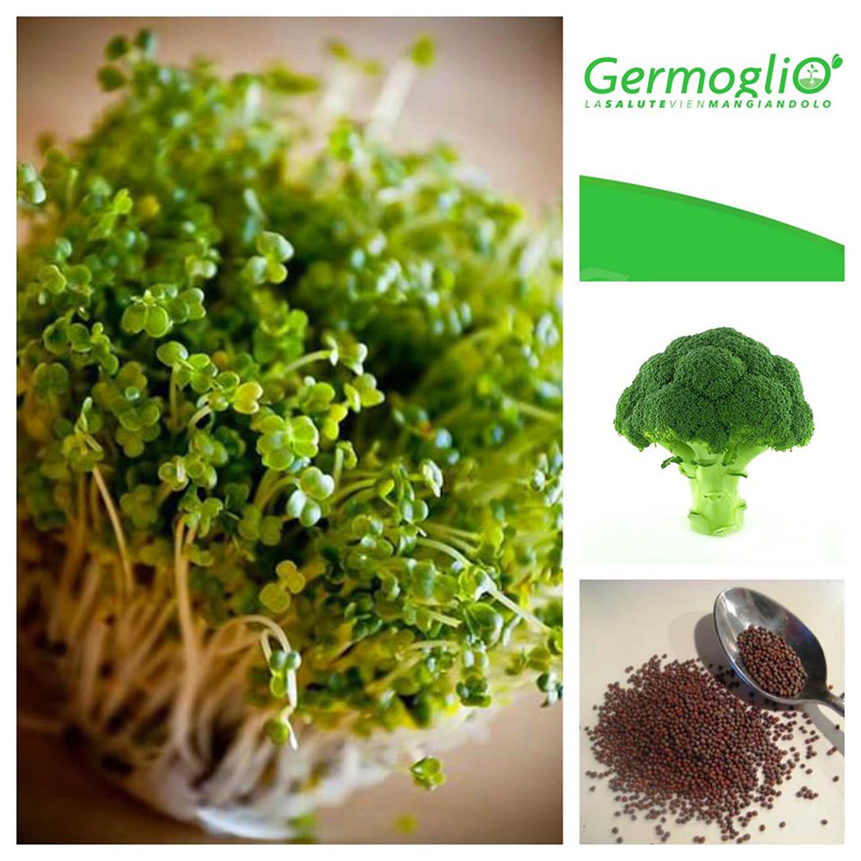 Germogli di broccolo semi